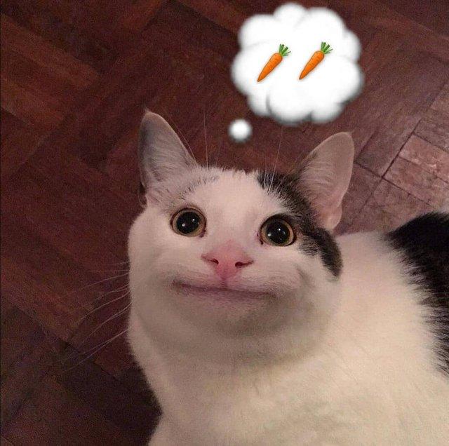 Кумедний кіт прославився завдяки широкій посмішці: веселі кадри - фото 423338