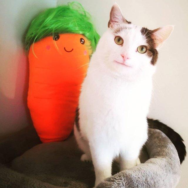 Кумедний кіт прославився завдяки широкій посмішці: веселі кадри - фото 423339