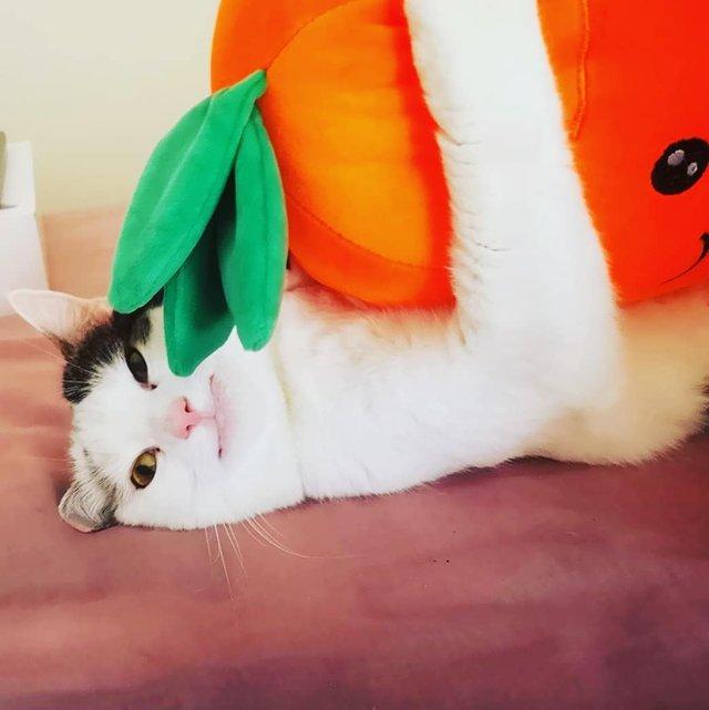 Кумедний кіт прославився завдяки широкій посмішці: веселі кадри - фото 423342