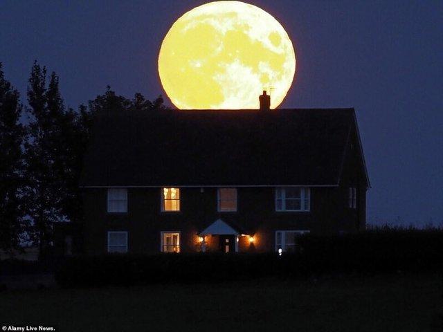 Кукурудзяний місяць: з'явилися яскраві знімки рідкісного явища - фото 423543