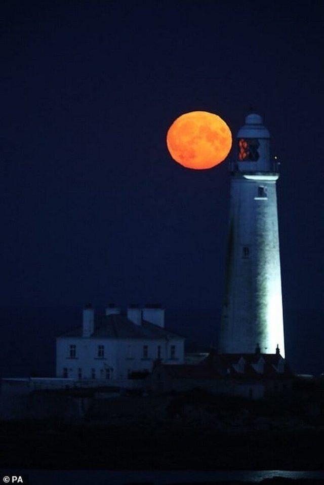 Кукурудзяний місяць: з'явилися яскраві знімки рідкісного явища - фото 423546