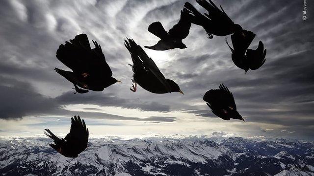 Wildlife Photographer of the Year: 13-річний фотограф став одним з переможців конкурсу - фото 423633