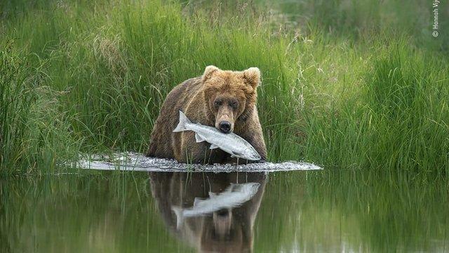 Wildlife Photographer of the Year: 13-річний фотограф став одним з переможців конкурсу - фото 423643