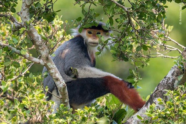 Wildlife Photographer of the Year: 13-річний фотограф став одним з переможців конкурсу - фото 423644