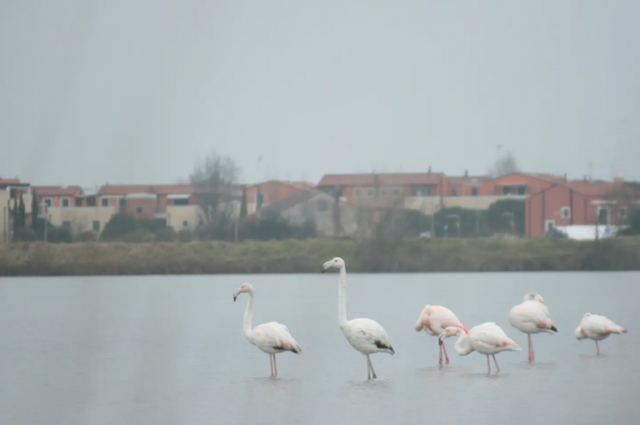 В Італії пропонують орендувати острів за 3 тисячі гривень - фото 423706