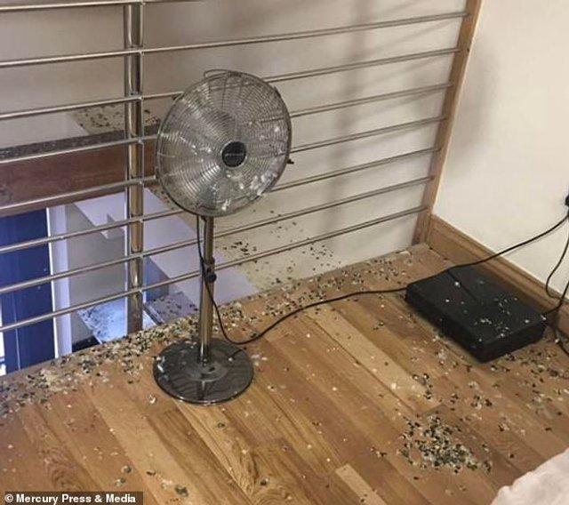 Студента шокував стан його квартири після п'яти місяців карантину: фото - фото 423728