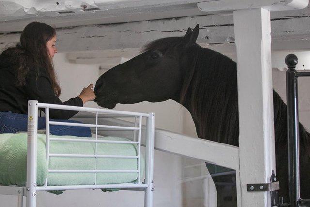 У Великобританії відкрився готель, в якому можна провести ніч в стійлі з кіньми - фото 424045