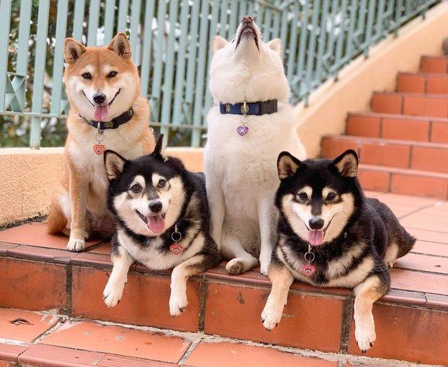 У всіх є такий друг: кумедний собака псує всі фото і підкорює мережу - фото 425384