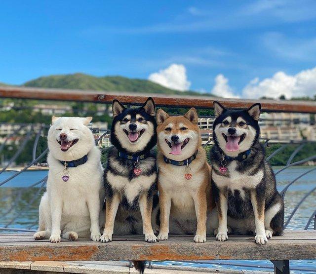 У всіх є такий друг: кумедний собака псує всі фото і підкорює мережу - фото 425385