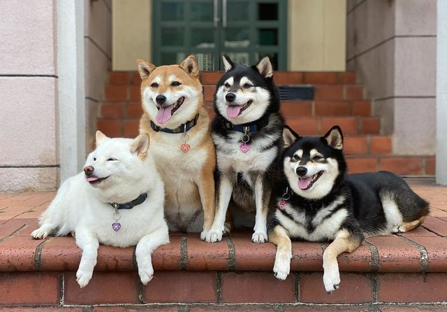 У всіх є такий друг: кумедний собака псує всі фото і підкорює мережу - фото 425386
