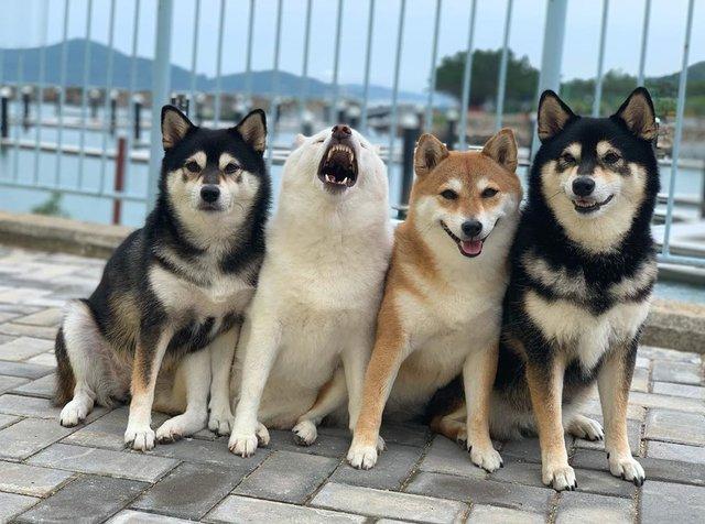 У всіх є такий друг: кумедний собака псує всі фото і підкорює мережу - фото 425387