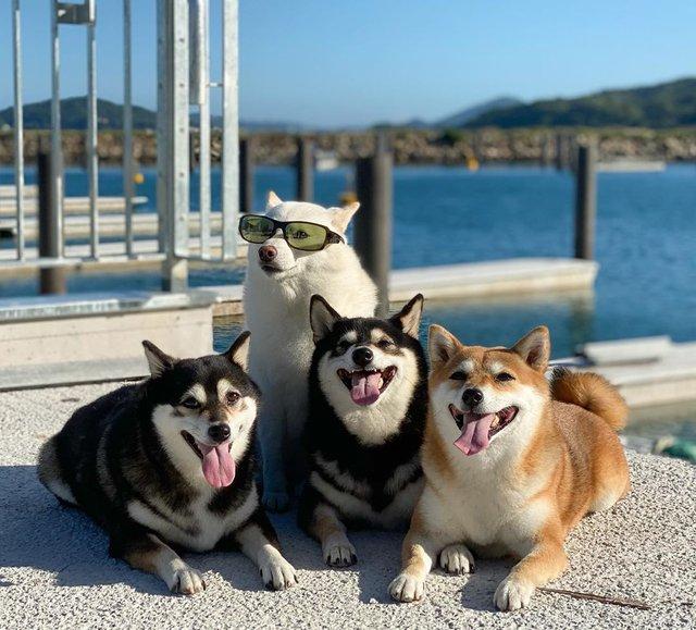 У всіх є такий друг: кумедний собака псує всі фото і підкорює мережу - фото 425388
