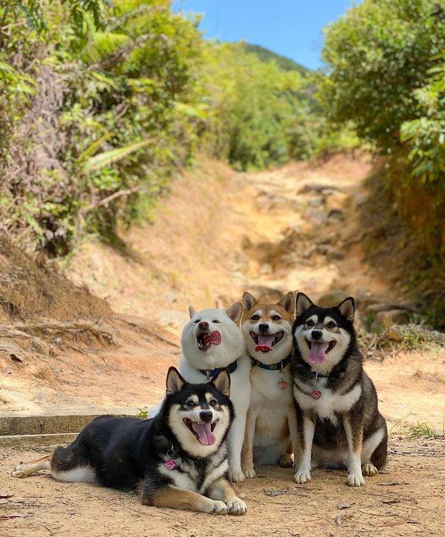 У всіх є такий друг: кумедний собака псує всі фото і підкорює мережу - фото 425389