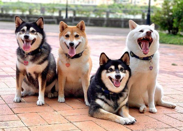 У всіх є такий друг: кумедний собака псує всі фото і підкорює мережу - фото 425390