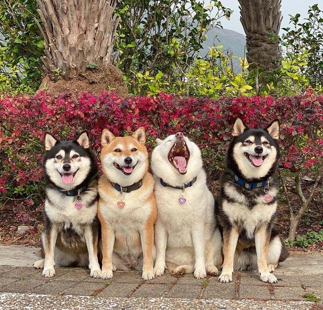 У всіх є такий друг: кумедний собака псує всі фото і підкорює мережу - фото 425391
