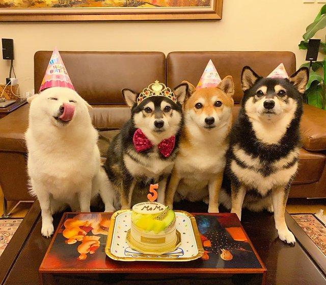 У всіх є такий друг: кумедний собака псує всі фото і підкорює мережу - фото 425392