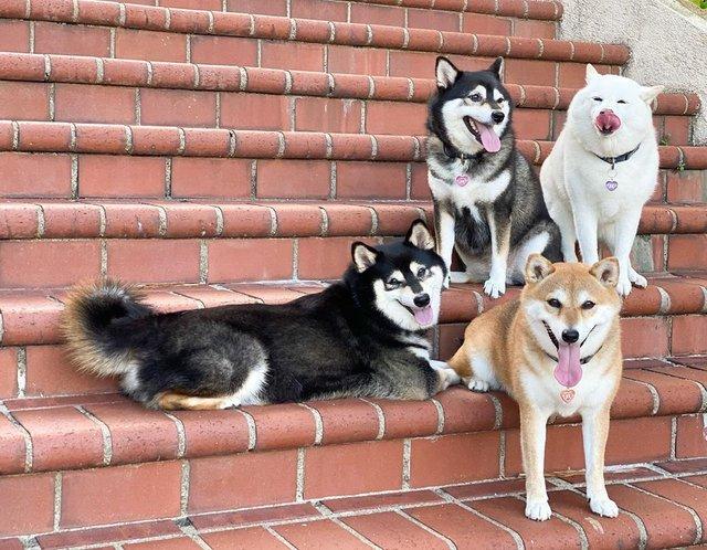 У всіх є такий друг: кумедний собака псує всі фото і підкорює мережу - фото 425393