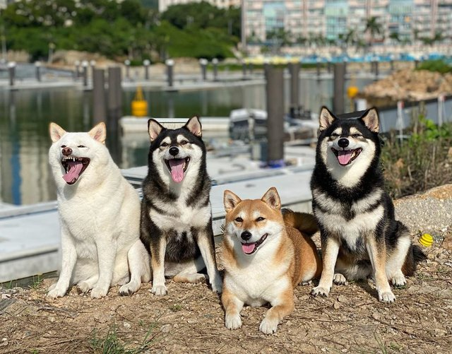 У всіх є такий друг: кумедний собака псує всі фото і підкорює мережу - фото 425394