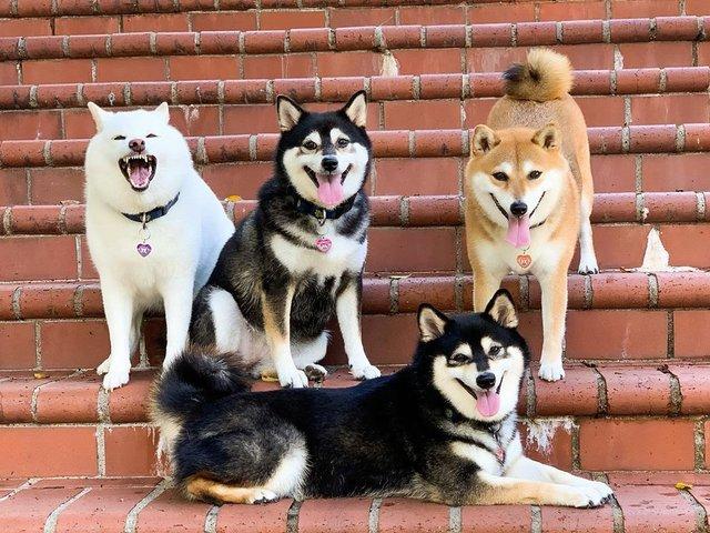 У всіх є такий друг: кумедний собака псує всі фото і підкорює мережу - фото 425395