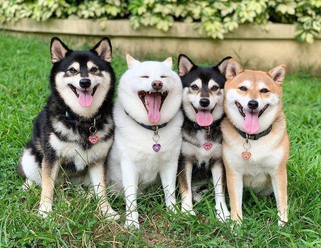 У всіх є такий друг: кумедний собака псує всі фото і підкорює мережу - фото 425396