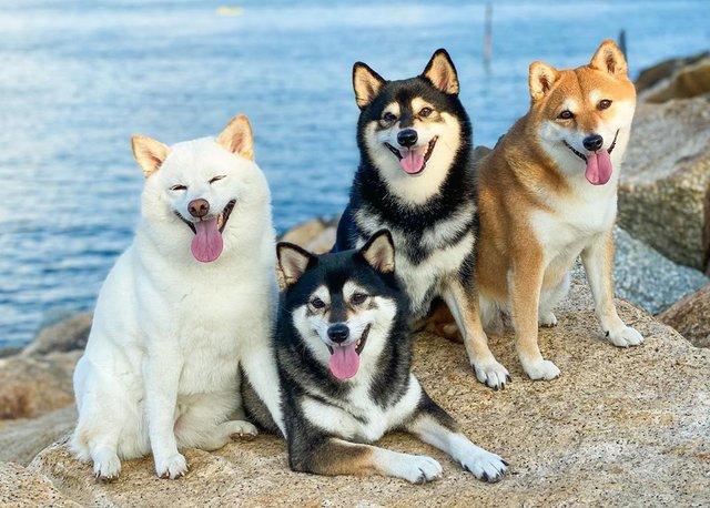 У всіх є такий друг: кумедний собака псує всі фото і підкорює мережу - фото 425397