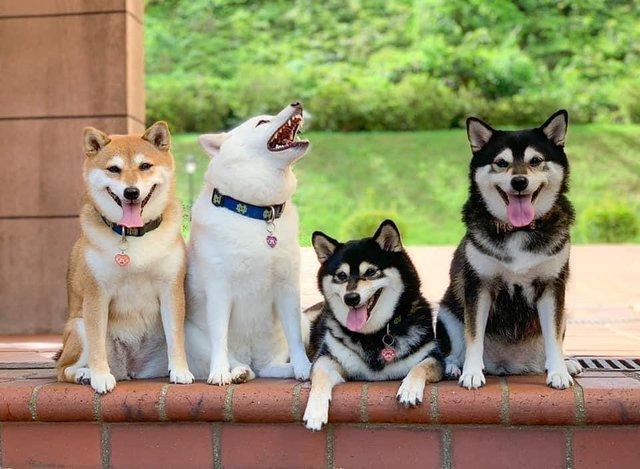 У всіх є такий друг: кумедний собака псує всі фото і підкорює мережу - фото 425399