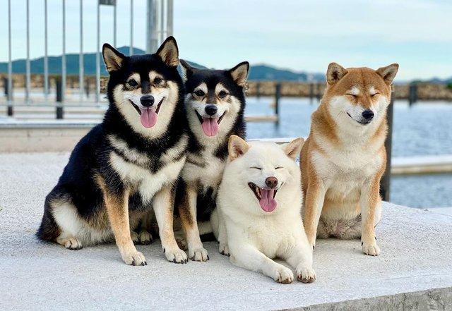 У всіх є такий друг: кумедний собака псує всі фото і підкорює мережу - фото 425400