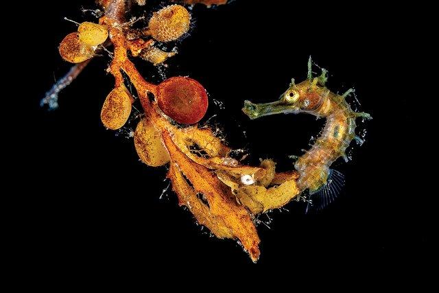 Названі найкращі підводні знімки 2020 року: зачаровує - фото 426258