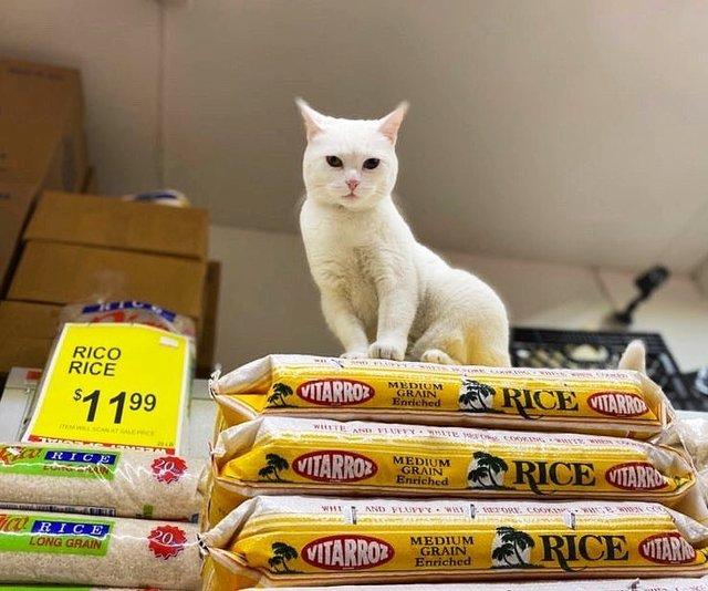 Хлопець публікує кумедні фото котів, які відпочивають у магазині - фото 426330