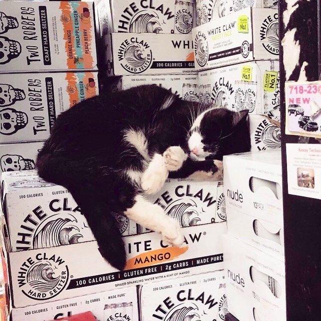 Хлопець публікує кумедні фото котів, які відпочивають у магазині - фото 426332