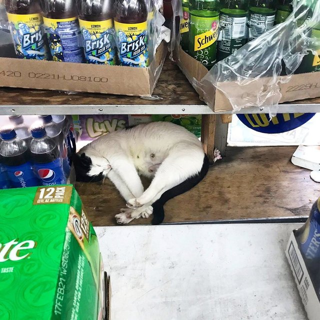 Хлопець публікує кумедні фото котів, які відпочивають у магазині - фото 426335