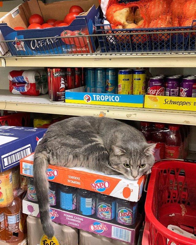 Хлопець публікує кумедні фото котів, які відпочивають у магазині - фото 426336