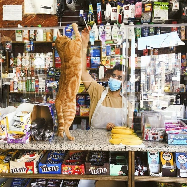 Хлопець публікує кумедні фото котів, які відпочивають у магазині - фото 426338