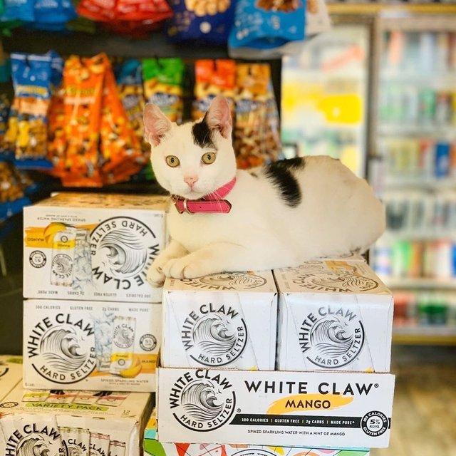 Хлопець публікує кумедні фото котів, які відпочивають у магазині - фото 426339