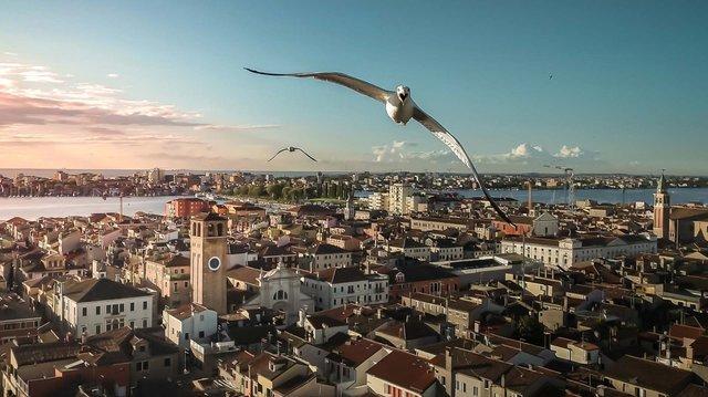 Дивіться фото переможців фотоконкурсу Drone Photo Awards 2020 - фото 427535