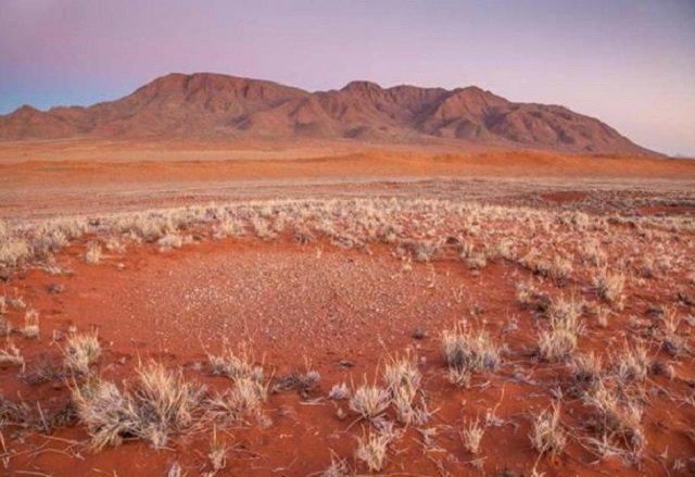 Науковці знайшли пояснення появи 'відьомських' кіл в Африці та Австралії: фотофакт - фото 427569