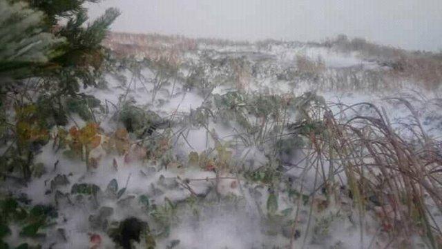 У Карпатах випав перший сніг: фотофакт - фото 427623
