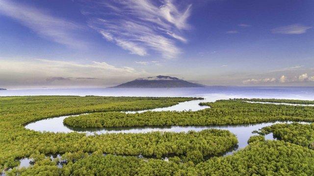 Унікальне місце на Землі: як виглядають мангрові ліси з багатим підводним світом - фото 427644