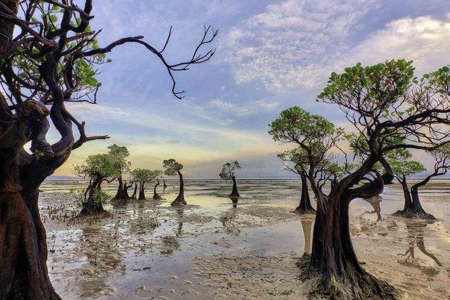 Унікальне місце на Землі: як виглядають мангрові ліси з багатим підводним світом - фото 427646
