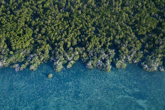 Унікальне місце на Землі: як виглядають мангрові ліси з багатим підводним світом - фото 427647