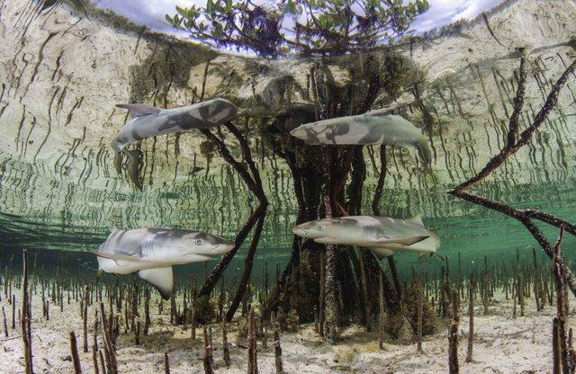 Унікальне місце на Землі: як виглядають мангрові ліси з багатим підводним світом - фото 427648