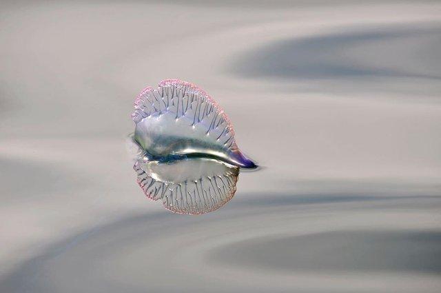 British Wildlife Photography Awards: вибрано 15 найкращих фотографій тварин за десятиліття - фото 428882