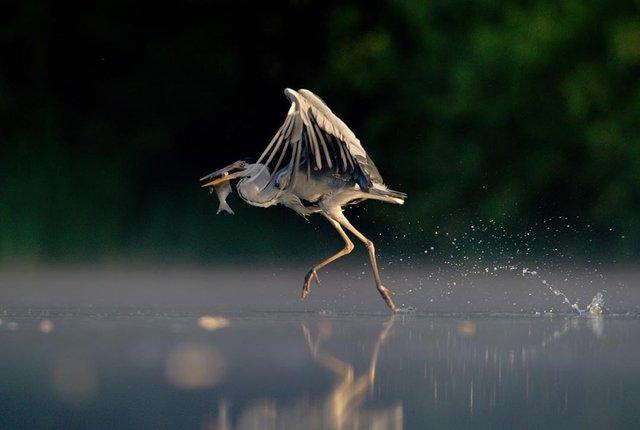 British Wildlife Photography Awards: вибрано 15 найкращих фотографій тварин за десятиліття - фото 428883