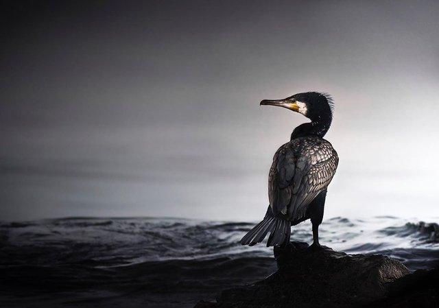 British Wildlife Photography Awards: вибрано 15 найкращих фотографій тварин за десятиліття - фото 428884