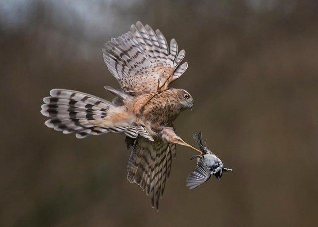 British Wildlife Photography Awards: вибрано 15 найкращих фотографій тварин за десятиліття - фото 428885