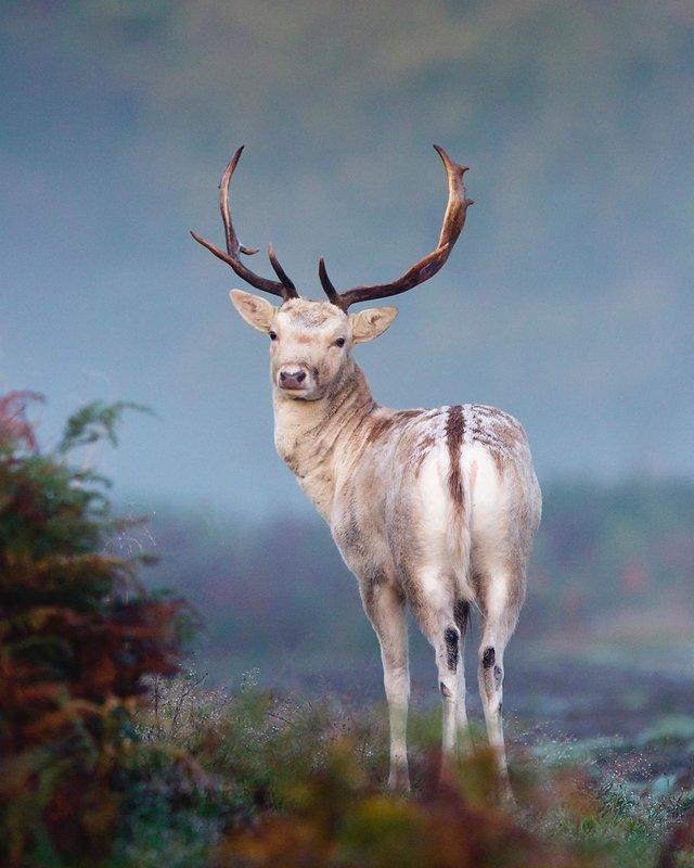 British Wildlife Photography Awards: вибрано 15 найкращих фотографій тварин за десятиліття - фото 428886