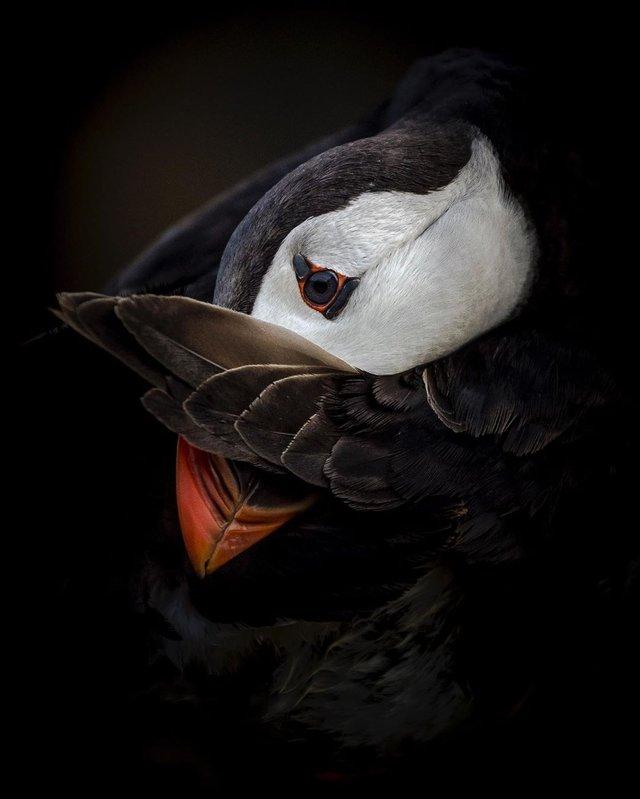 British Wildlife Photography Awards: вибрано 15 найкращих фотографій тварин за десятиліття - фото 428887
