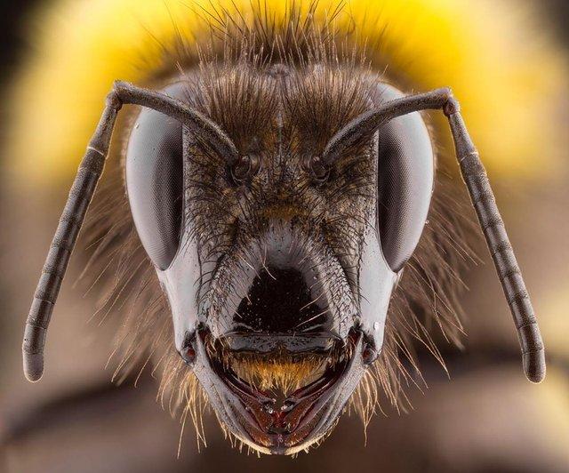 British Wildlife Photography Awards: вибрано 15 найкращих фотографій тварин за десятиліття - фото 428889