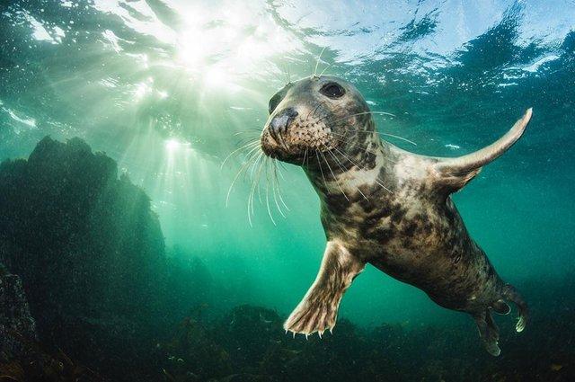 British Wildlife Photography Awards: вибрано 15 найкращих фотографій тварин за десятиліття - фото 428890
