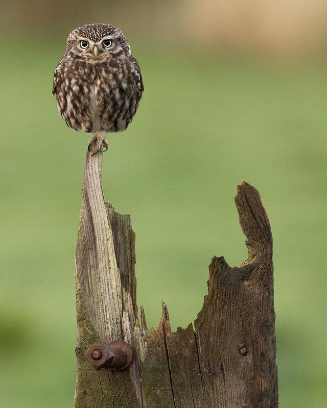 British Wildlife Photography Awards: вибрано 15 найкращих фотографій тварин за десятиліття - фото 428892
